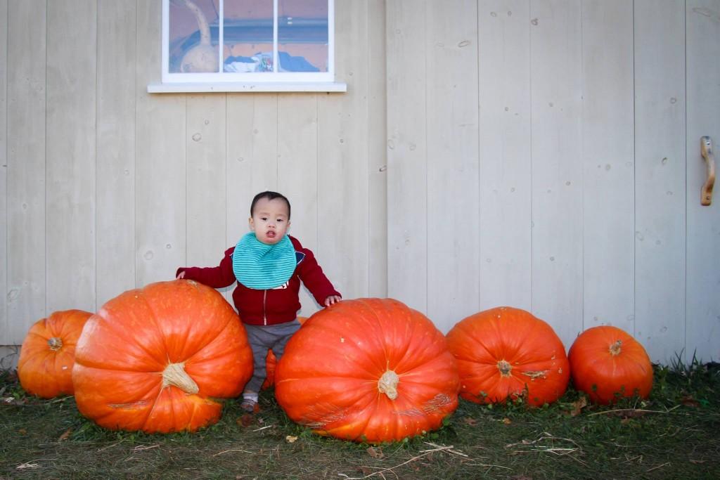 luca_pumpkin